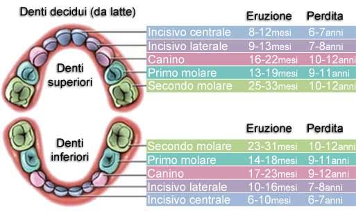 schema dentizione